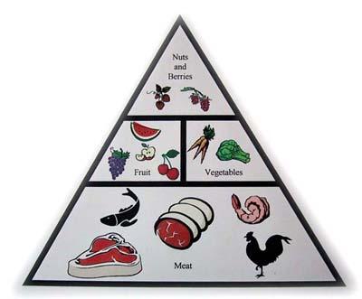 Paleolithic Food Pyramid